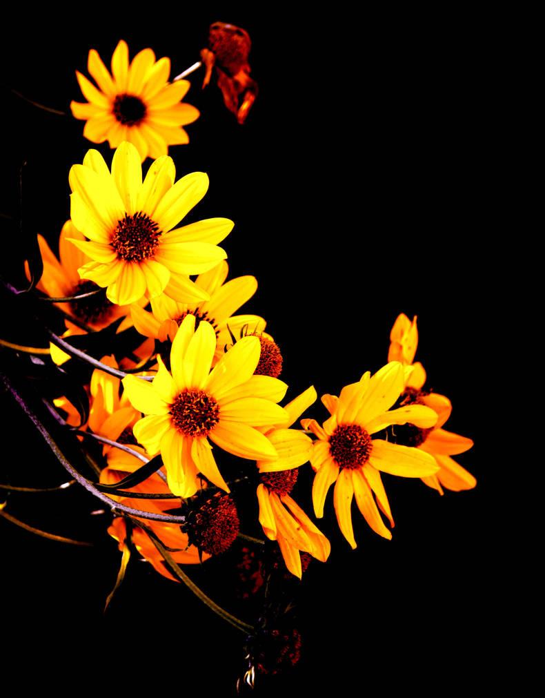 Fall Flowers by El-Sharra