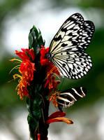 Favourite Flower by El-Sharra