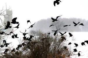 Explosion of Crows by El-Sharra