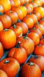 Pumpkins by El-Sharra