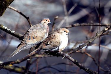 Mourning Doves by El-Sharra