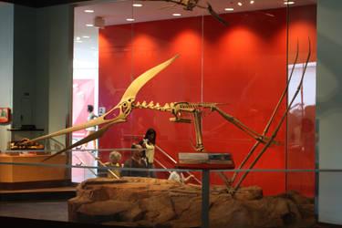 Pteranodon longiceps by ijreid