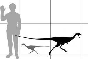 Limusaurus size by ijreid