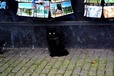 Black Cat by 3TrianglesX