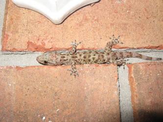 gecko by thrak-stock