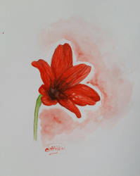 Red Flower by Loline