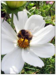 a Bee by Kalashnik
