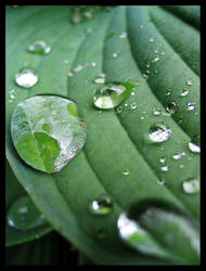 After rain. by Kalashnik