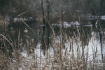 Winter Pond by Psychedelic-Song