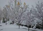 Utah Snow Pic 1 by JCServant