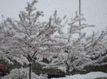 Utah Snow Pic 3 by JCServant