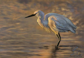 15-06- Little Egret by Leia1987