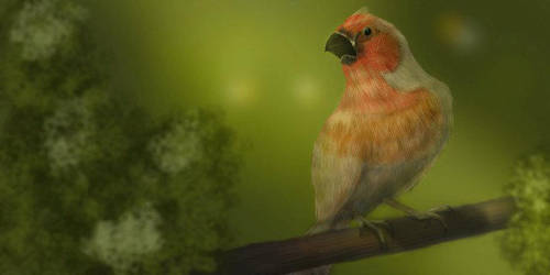 Bird by BaronVonMunchausen