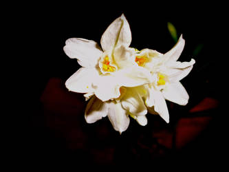The White Flower by meganathebanana