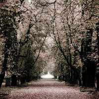 Walking alone by vladxc
