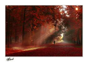 Sleepwalker by vladxc