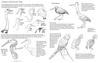 Comparative bird anatomy Necks by Auronyth