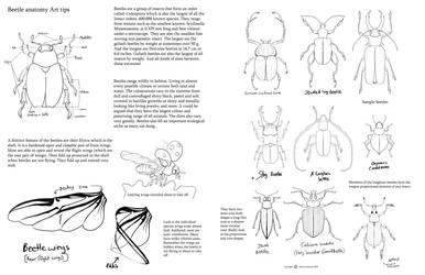 Beetle Anatomy by Auronyth