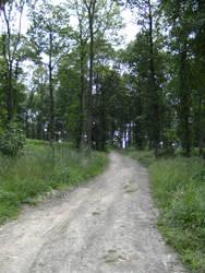 Wood Path... by the-night-bird