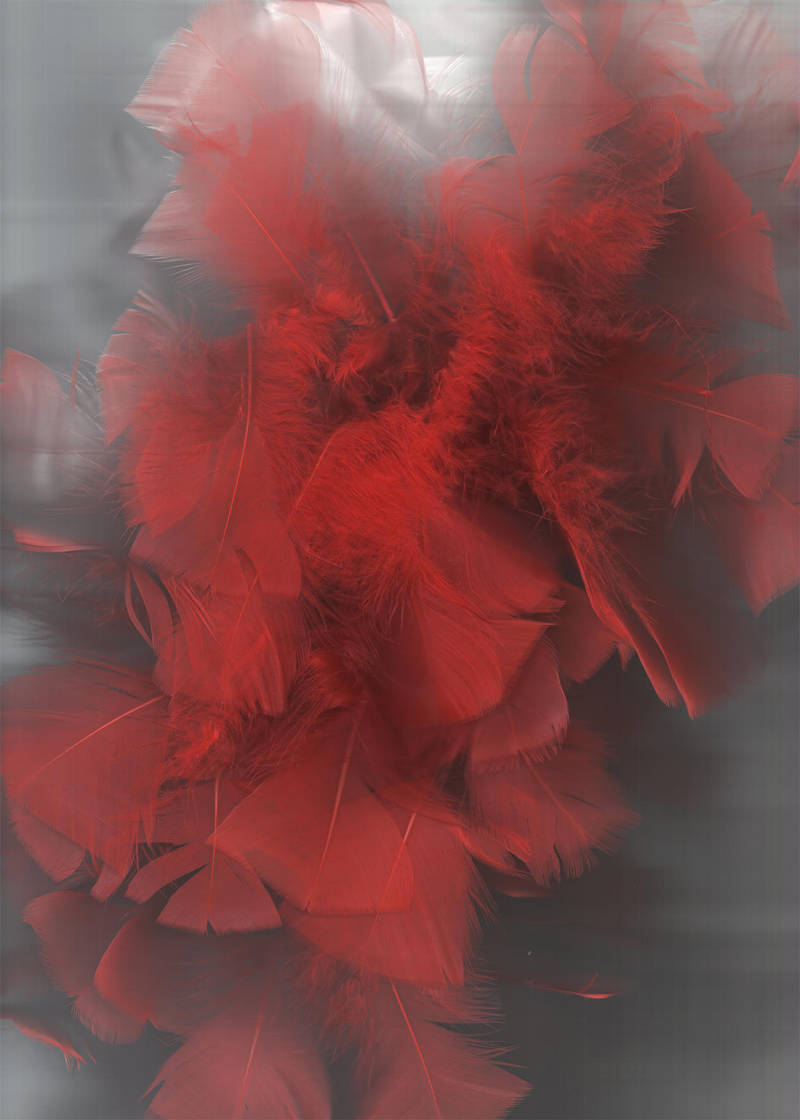 Red Feathers 02... by the-night-bird
