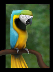 Parrot by carny87