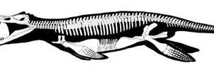 Kronosaurus by banchero