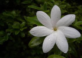 Flower by Patomkin