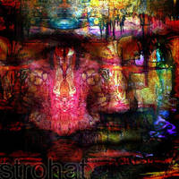 strohatID - by strohat by psychedelics
