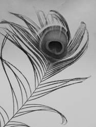 Feather 5 by Kai-weallscream