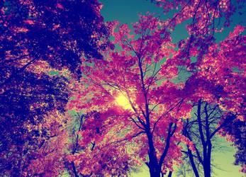 Blossom by XxDarkbutterflyxX