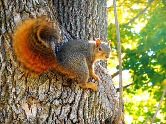 Squirrel by XxDarkbutterflyxX