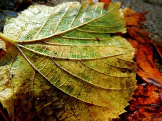 A Leaf by XxDarkbutterflyxX