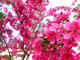 Embrace the Beauty of Nature by XxDarkbutterflyxX
