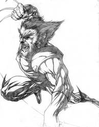 Wolverine by CHRU