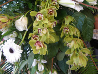 Green Orchids by ArtisticAdventures