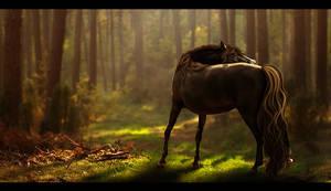 In these woods I belong by RandomCatLady
