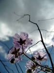 Spring Flowers 6 - Wildflower by Endeavouring