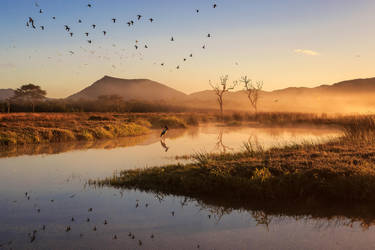 Duck Duck Jabiru by Questavia