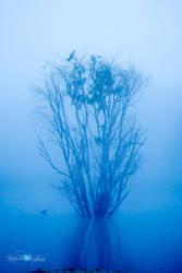 Blue Serenity by Questavia