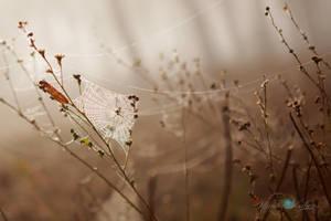 An Autumn Morning by Questavia