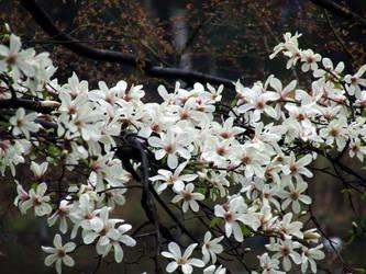 Flowerfall by oritana