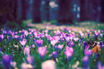 foretaste of spring by PatrickRuegheimer