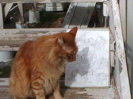 Dannycat inspects Ratha graphic novel sample page by rathacat