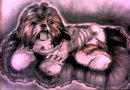 Shih Tzu by ActLikeAKid