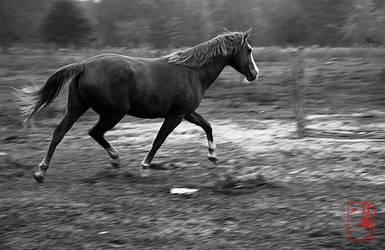 Prancing Horse by madshutterbug