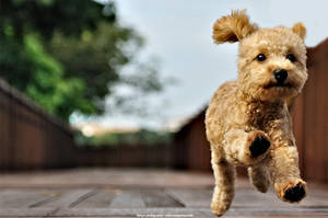 Dog by kenyin