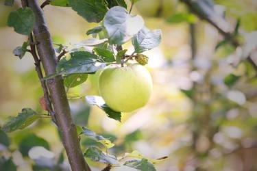 Apfel by elvenmaedchen
