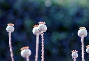 Poppy Pods -Blau by elvenmaedchen
