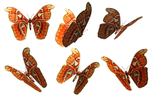 Butterflies 1 PNG Stock by Roy3D