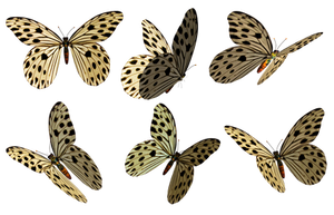 Butterflies 3 PNG Stock by Roy3D